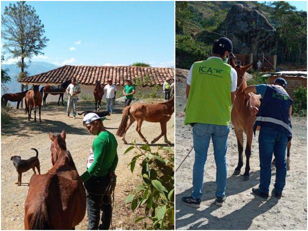 Foto-ICA-jornada-de-vacunacion-de-vacunacion-EVE-Narino-1.jpg