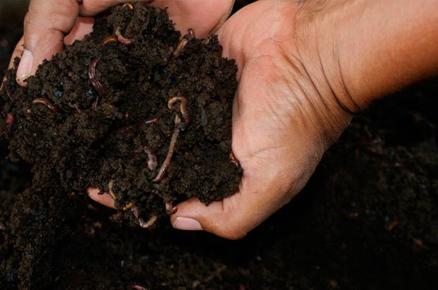 funcionarios del instituto colombiano agropecuario ica realizaron un taller terico prctico sobre elaboracin de abonos orgnicos lquidos y slidos
