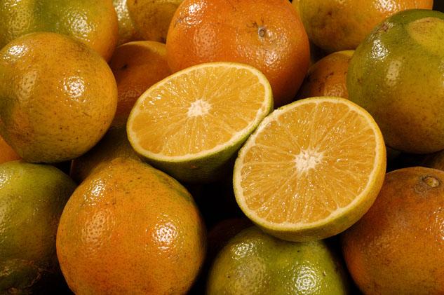Instituto colombiano agropecuario ica for Enfermedades citricos fotos