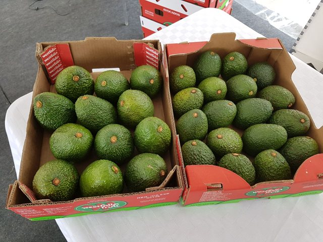 Photo of ICA Archive. Hass avocado