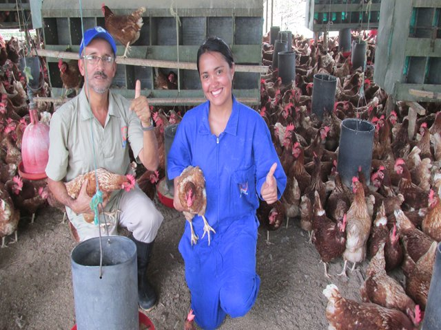 The ICA takes extreme measures to prevent the entry of avian influenza into the country